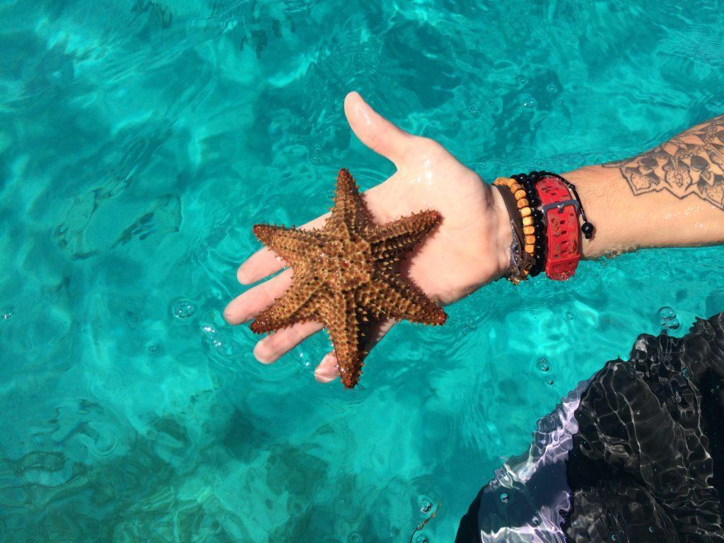 Les étoiles De Mer De Catalina Quetzal Cata Excursions
